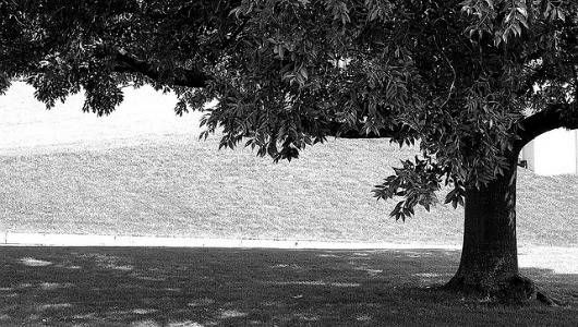 shade tree.jpg.560x0_q80_crop-smart.jpg