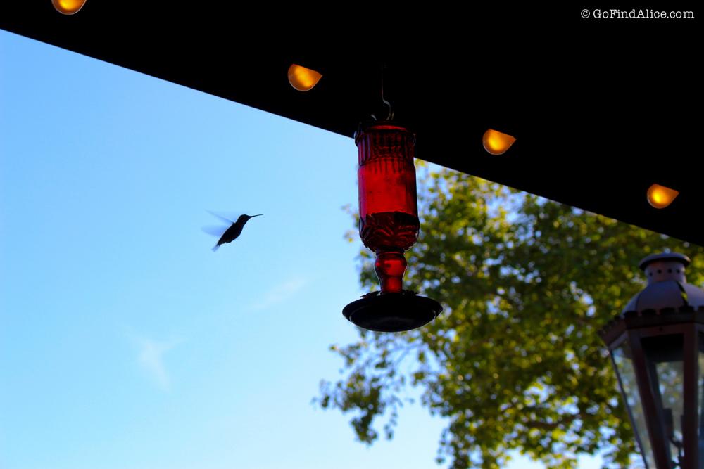 bird_solvang