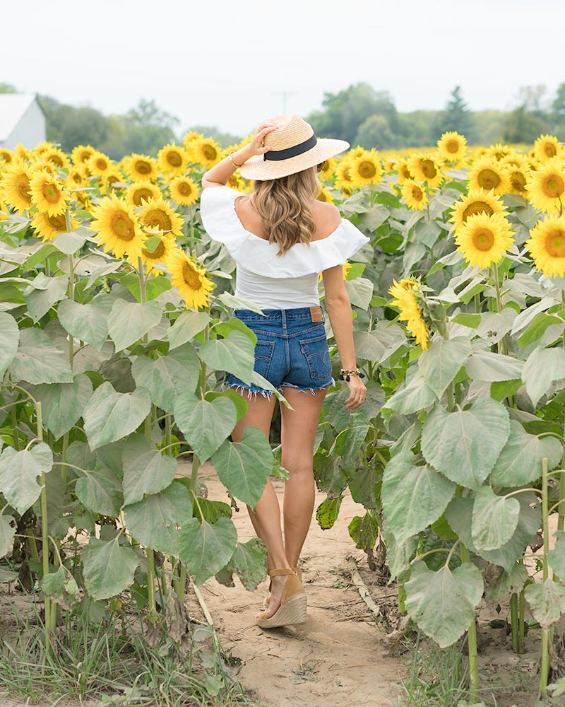 Sunflower fields, Grinter Farms