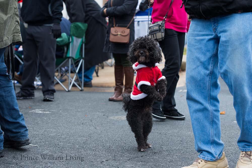PWLiving Christmas Parade  ManChristParade_RJinks (10).jpg