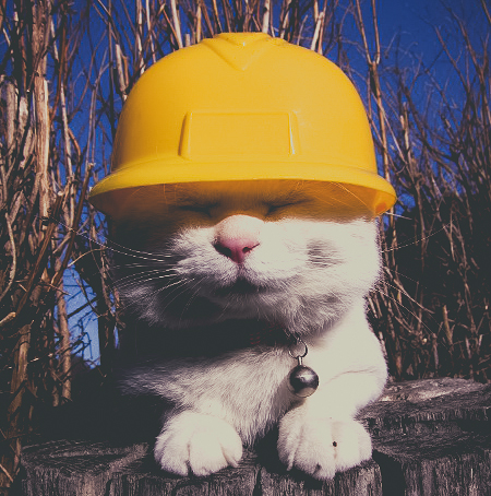 Style-Save-Us-Construction-Cat.jpg