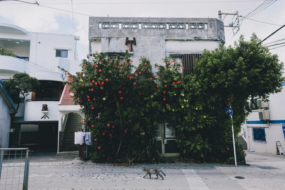 Cat on the Street.jpg