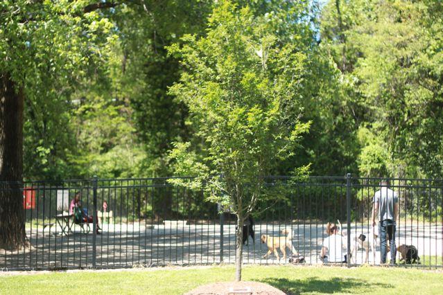 1 dog park.jpg