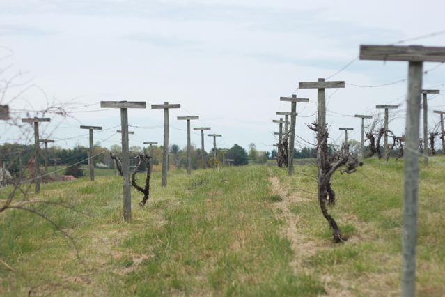 27 vineyard aisles.jpg
