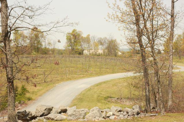 12 vineyard scene.jpg
