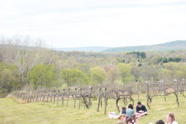 23 vineyard.jpg