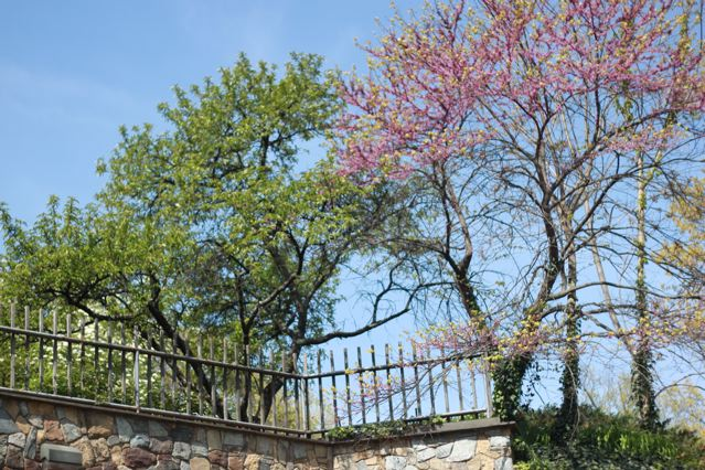 5 pretty trees and flowers.jpg