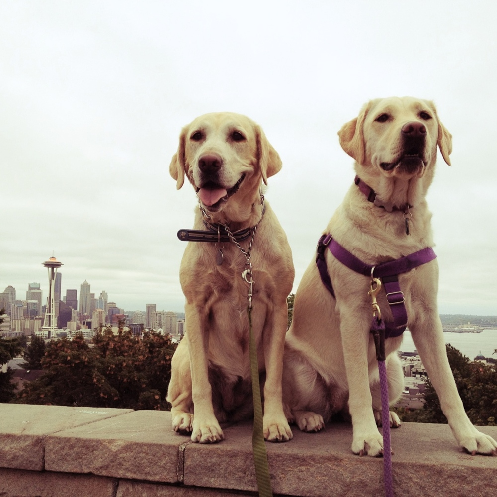 Bailey and Lufa at Kerry Park.jpg