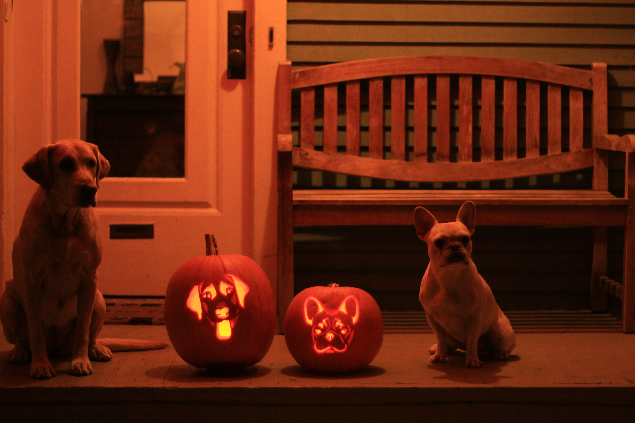 Dog pumpkin carving stencils (and pics of our Bailey and Bam-O ...
