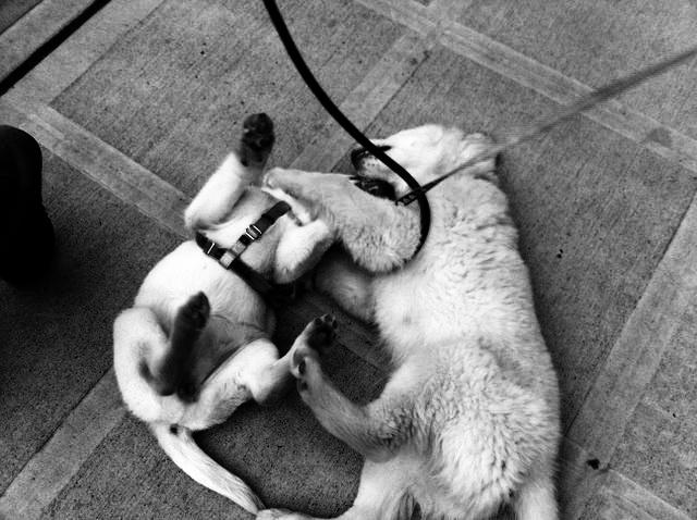Jambo and lufa just meet_bw.jpg