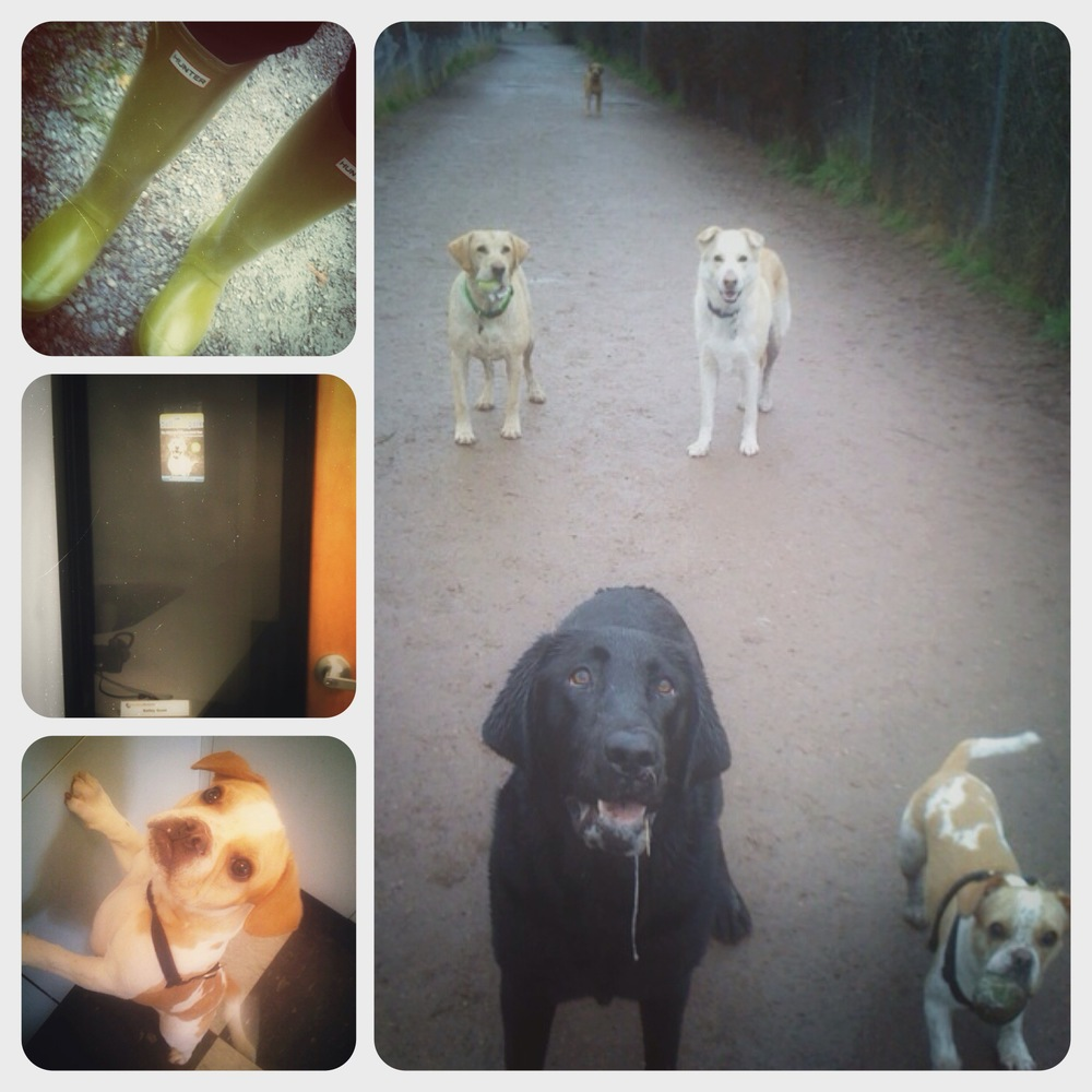 (right) ballwalkpark's first pack - Teddy (in the way back), Bailey, Chinook, Buster and Fletcher. (bottom left) Baby Fletcher at 4mo old on his first sleepover with Bailey and I. (middle left) My last day at an office job - ballwalkpark flier in the window. (top left) My beloved lime green hunter boots - the original ballwalkpark signature.