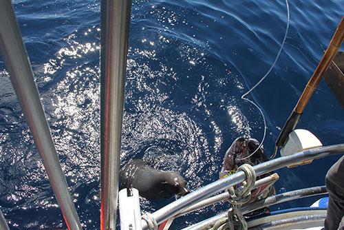 THE TUNA & THE SEAL