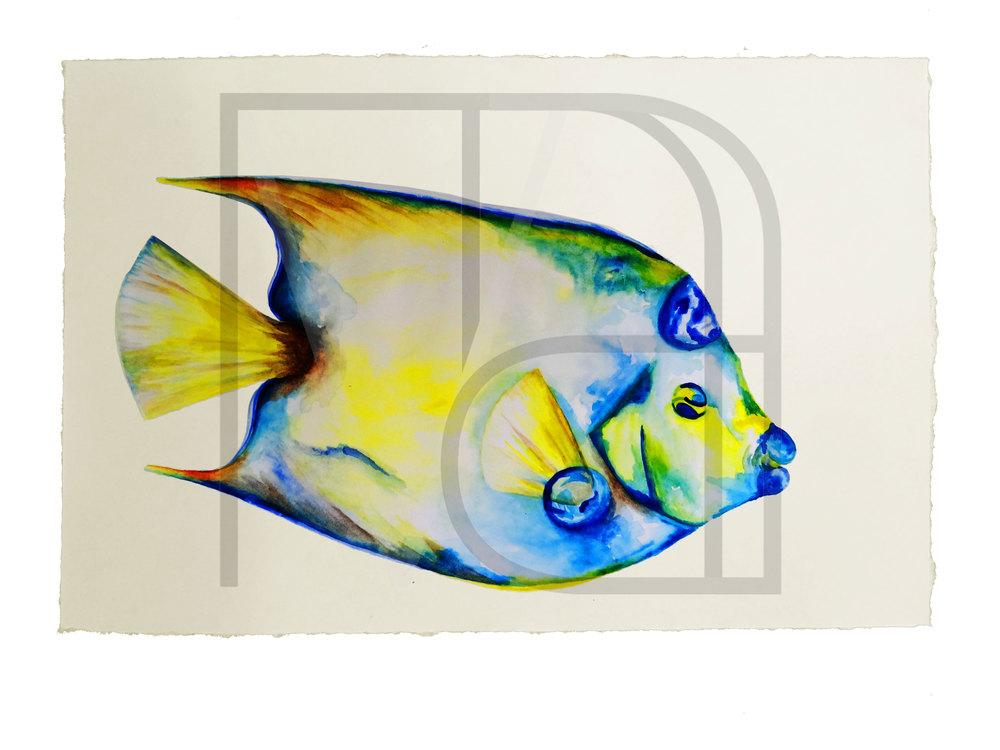REEF-FISH-1.jpg