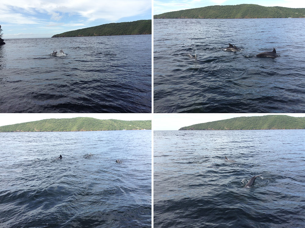 Dolphins joining us for breakfast