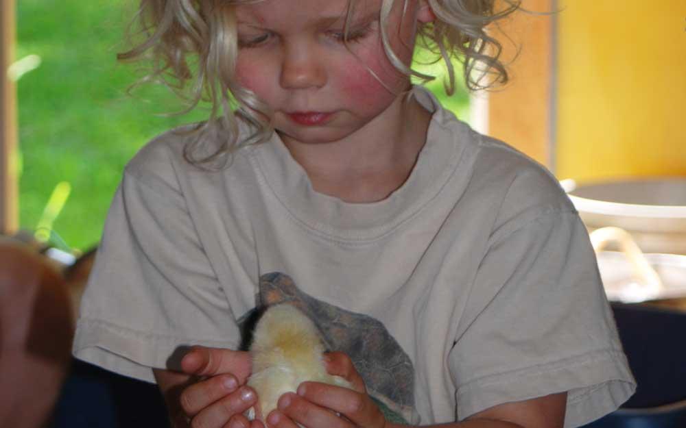 chick-1000.jpg