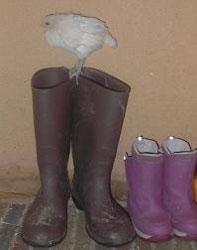 goose-boots.jpg