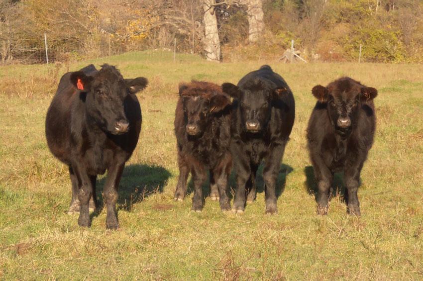 Grassfed-beef.jpg