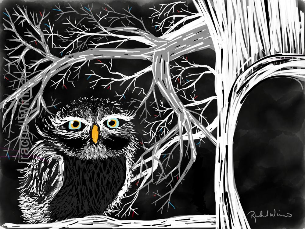 Aunty Owl