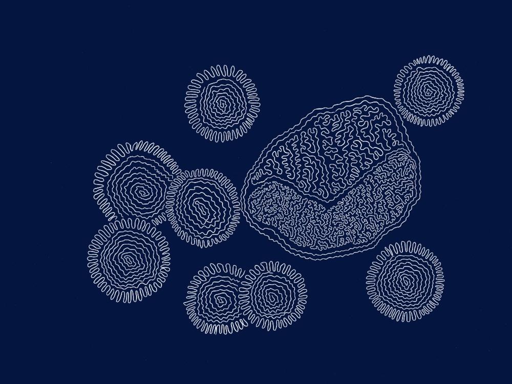 neutrophil illustration by rachel winner