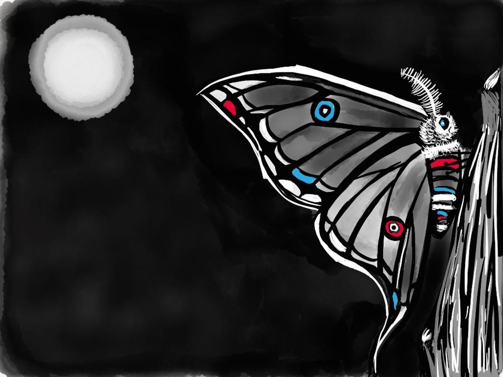 night butterfly illustration by rachel winner
