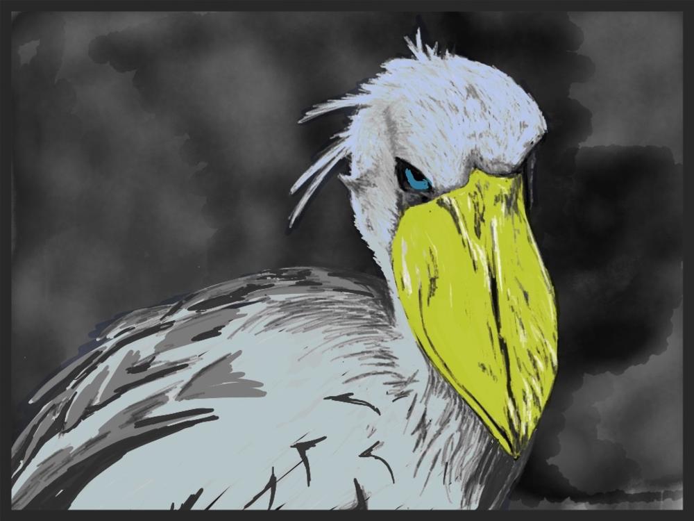 grump the shoebill illustration by rachel winner