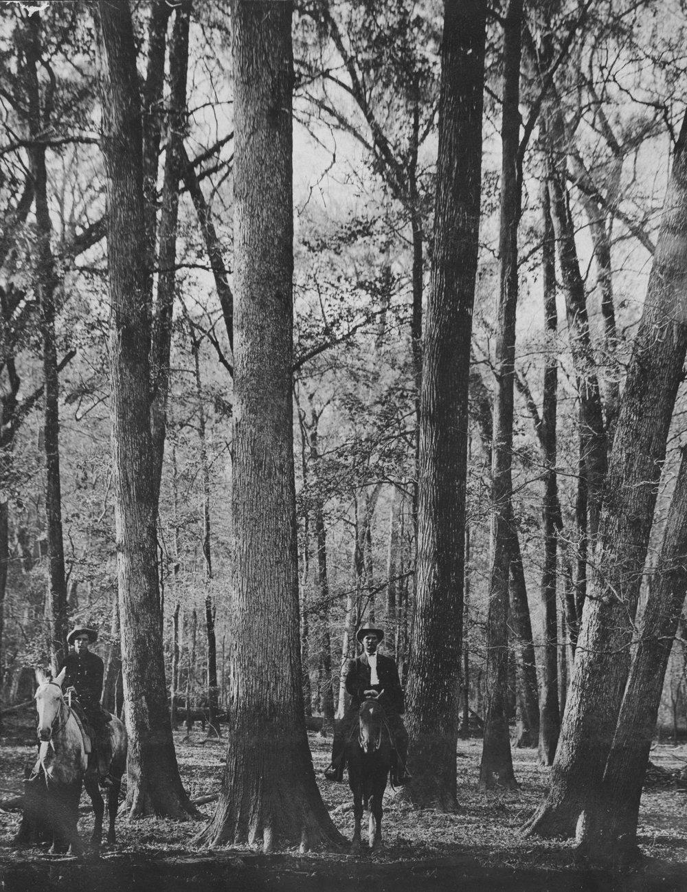 S.P. 302 white oak and gum hardwood JA Massengill