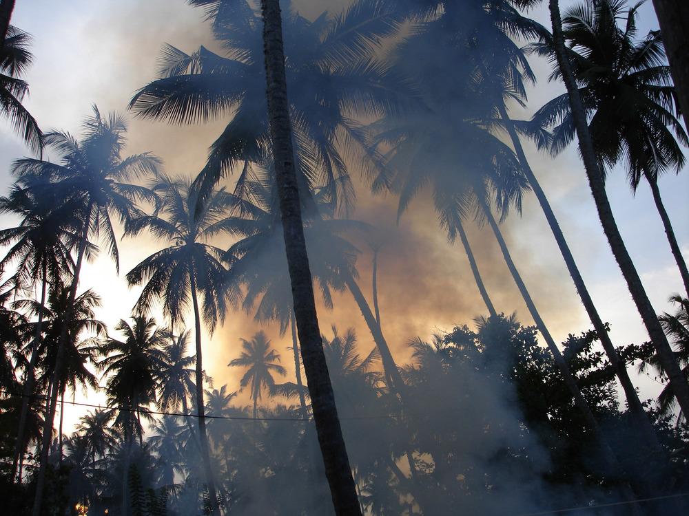 Sri palms