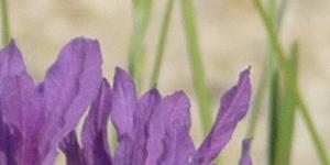 Flowers at Bonhays Meditation & Retreats