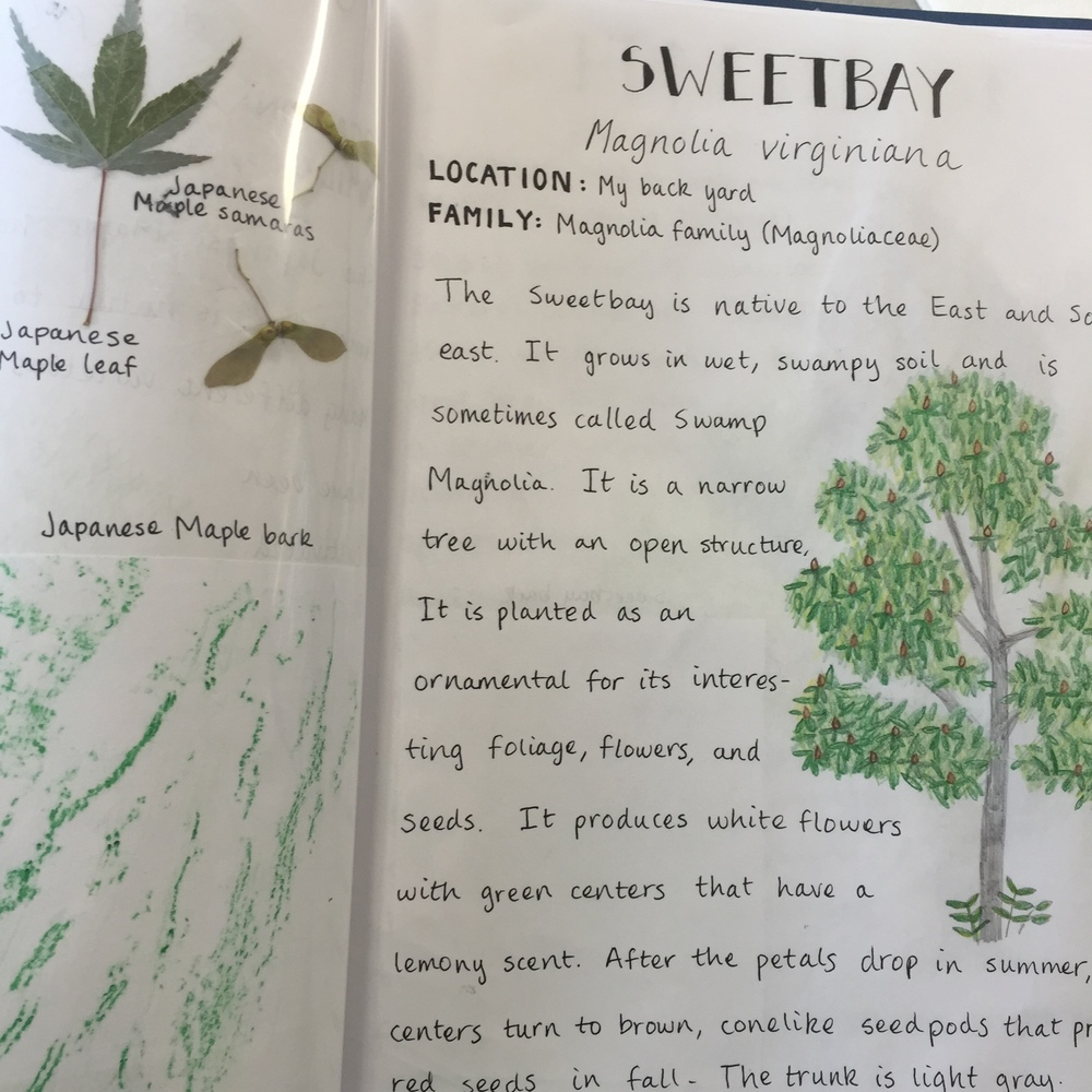 Page from a Trinity Academy student's tree project