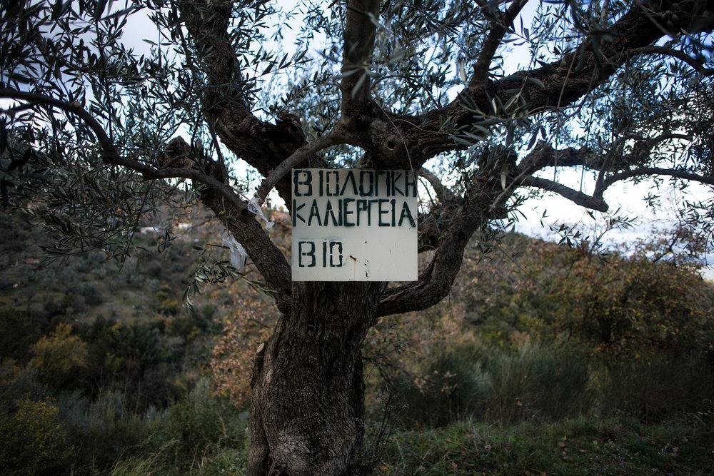 Griechenland S1 (630 von 1018).jpg