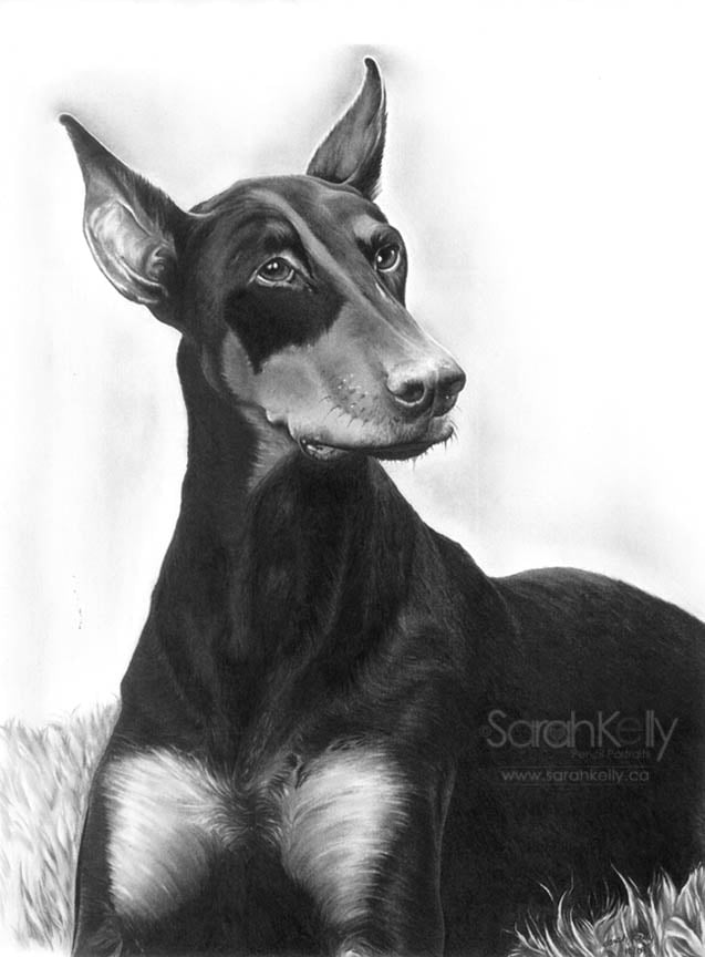 pencil_drawings_pets_01.jpg