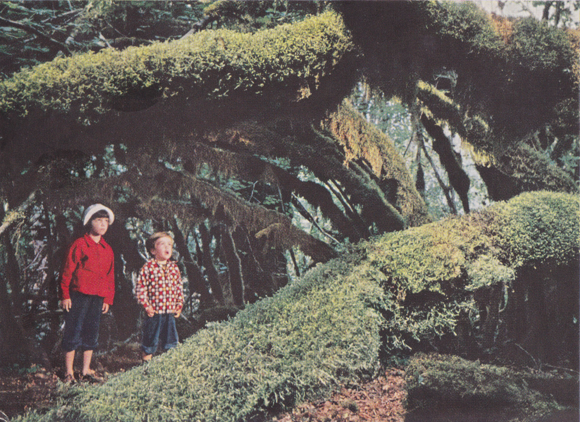 Forest Children