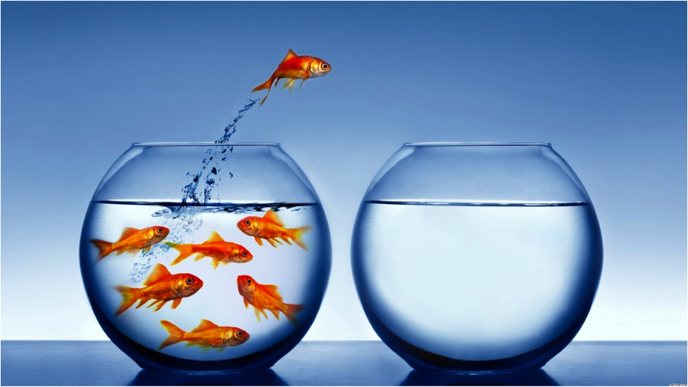 {Image Credit: http://www.freegreatpicture.com/goldfish/jumping-goldfish-1043