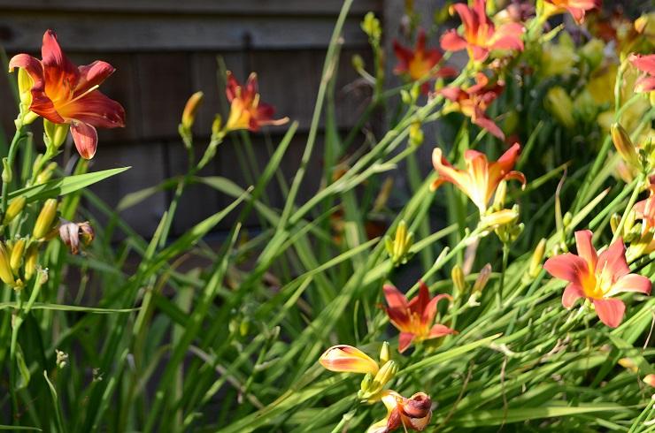 Wise Garden2.jpg