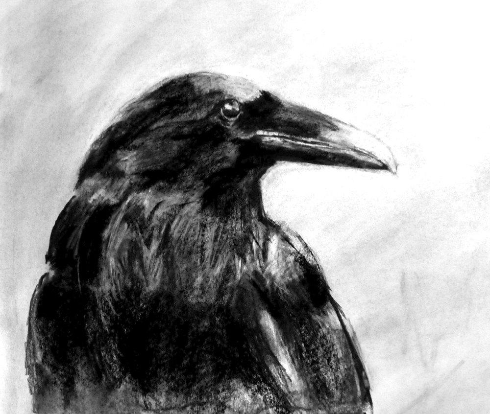MacKechnie Raven 4 lores.JPG