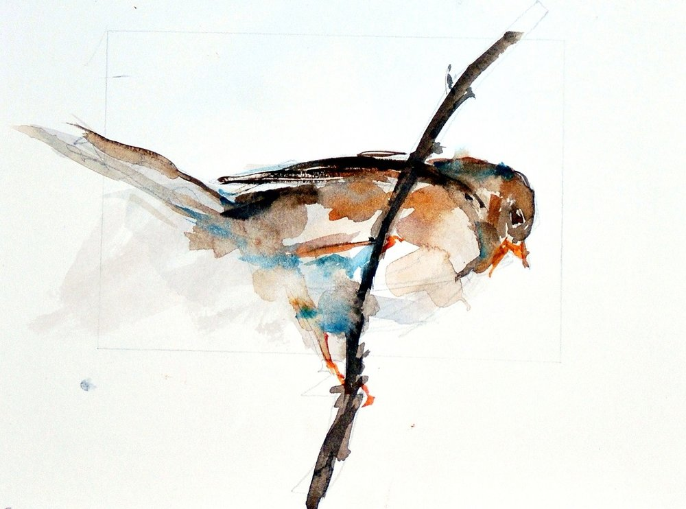 MacKechnie, watercolor sketch of sparrow, 8x10_sm.jpg