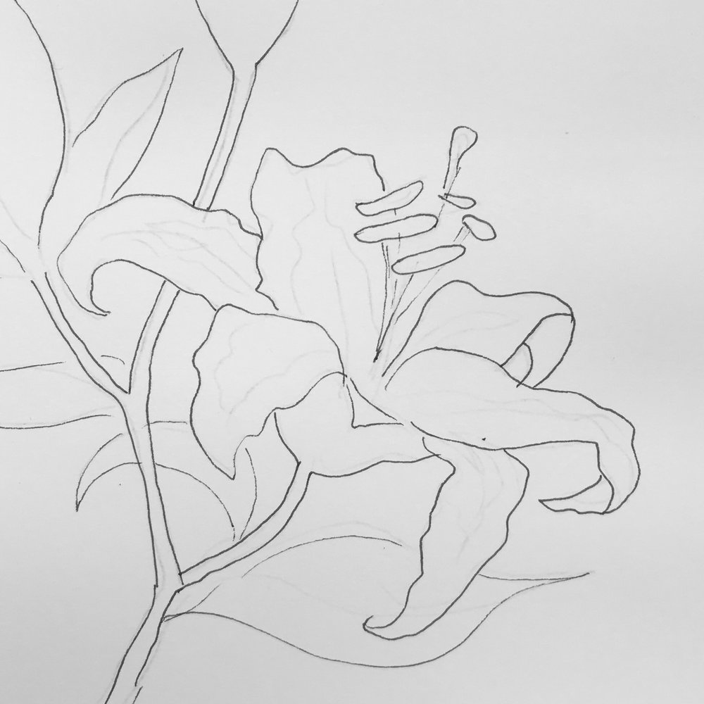 Lily image.jpg