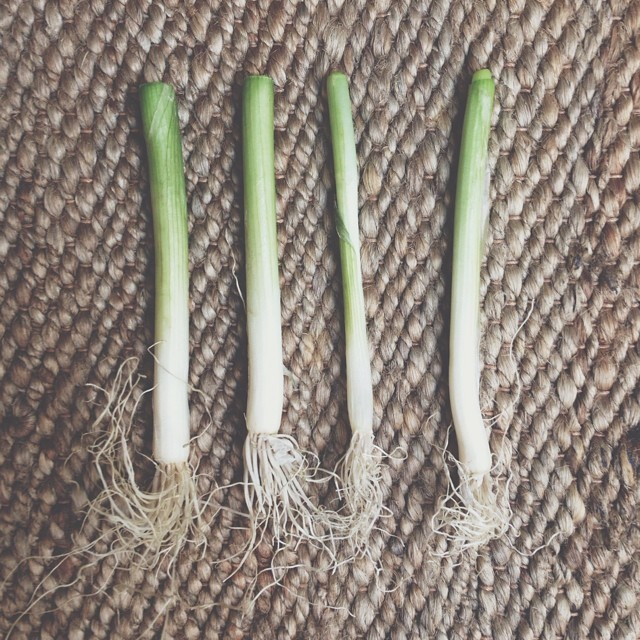 Remember the never ending Tim Tam packet? Did you know that your spring onions are just as magical? Replant these babies (and by that I mean literally stick them in some soil) and they will give you a never-ending supply. I haven't bought them for over a year and I eat them every day! #food #planting #harvest #garden #tips #hack #gardening #sustainable #oohfood #spring #onion #bulb #reuse #eco