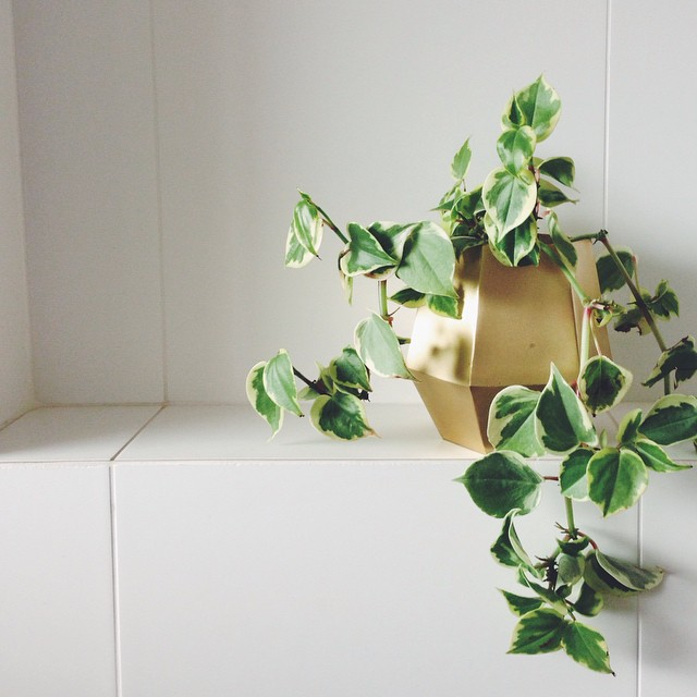 Country Road Home Accessories are out of control this season. I'm enjoying my new planter a little too much... Ahh the little things @countryroad #geometric #gold #planter #greenery #styling #bathroom #tiles #countryroad #succulent #greenlife #interior #design #decor #accessories #homewares #furniture #lovely #houseplant