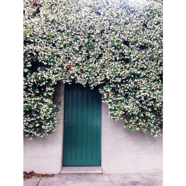 Happy Front Door Friday! Here's a beauty I stumbled across this week, how lovely is Jasmine season 😍 #frontdoorfriday #frontdoor #entry #jasmine #spring #design #ooh #spring #surryhills #green #foliage #knockknock