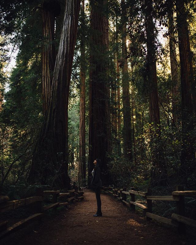 Just got home from a mini trip up north to SF. Couldn't find any fog. But we found some giant trees in Muir Woods. Check my IG story for a bunch more photos! ✌🏻 #roaminglost