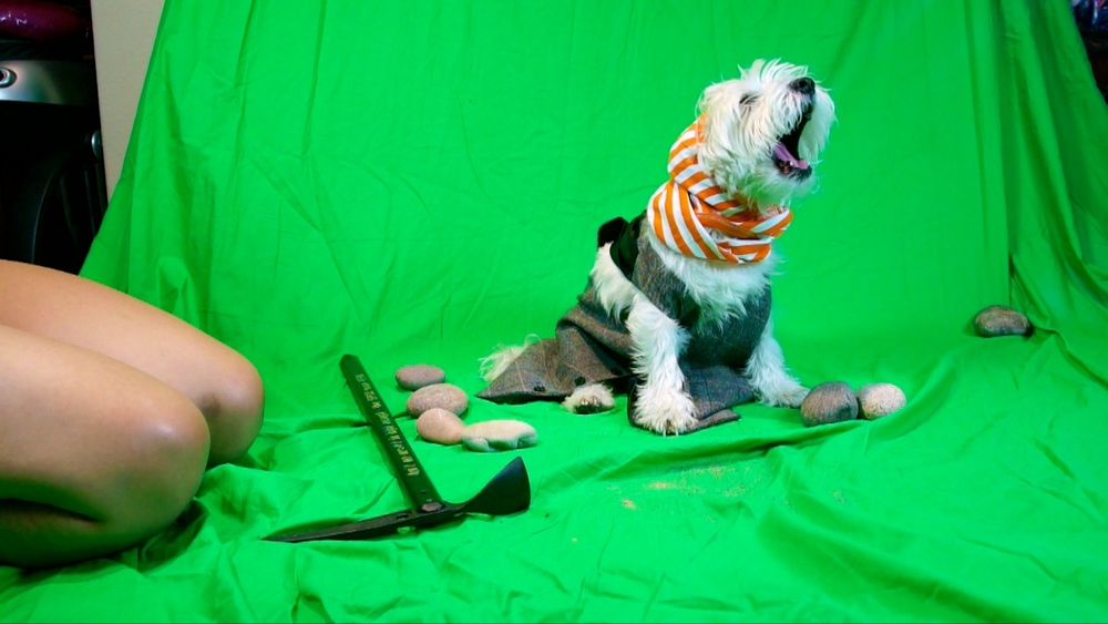 Sneeze Pup.jpg