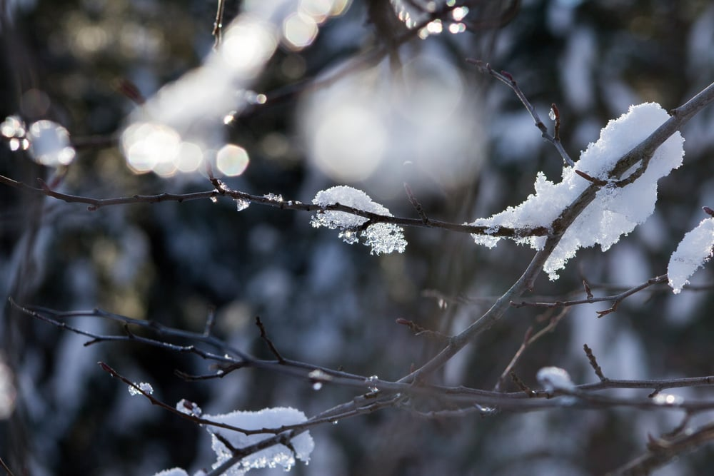 This pic reminds me of cherry blossoms, but with snow instead.