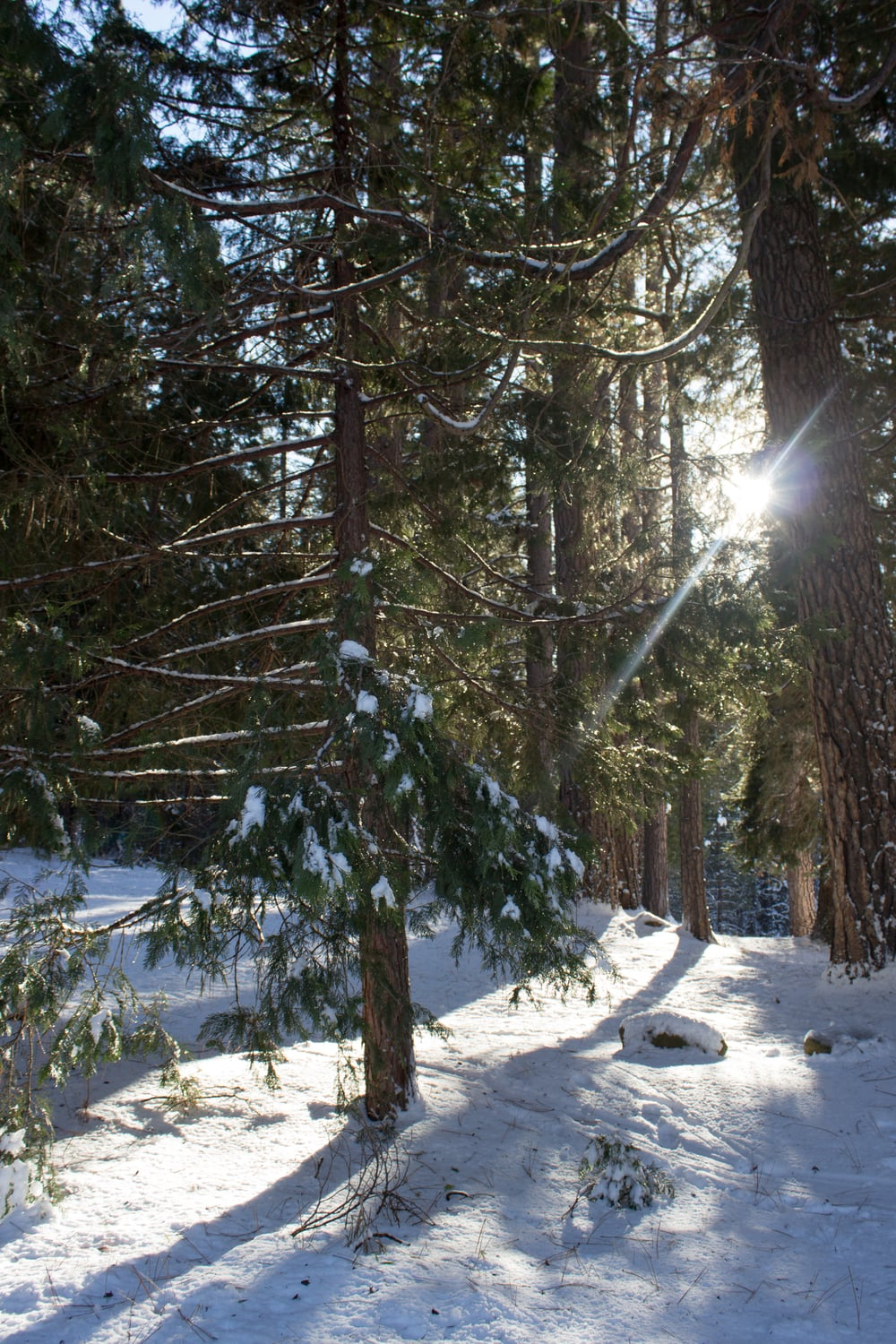 Angelic light, deep snowy woods...catch your breath if you can.