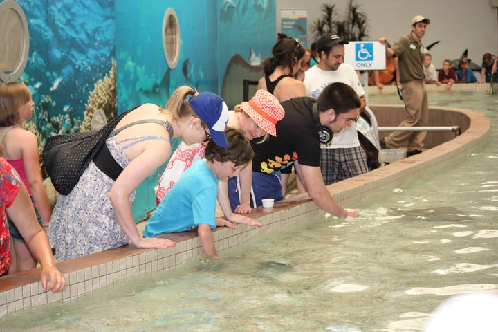 Touching Sting Rays - it's like petting puppies only slimier!