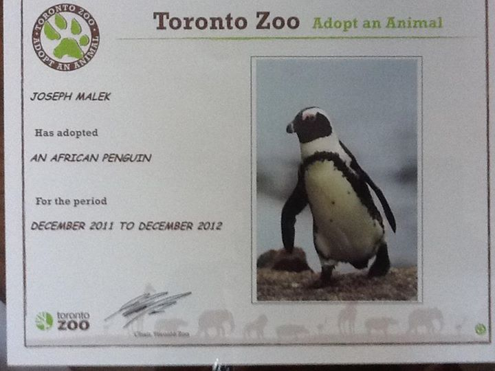 Meet my sibling - African Penguin!