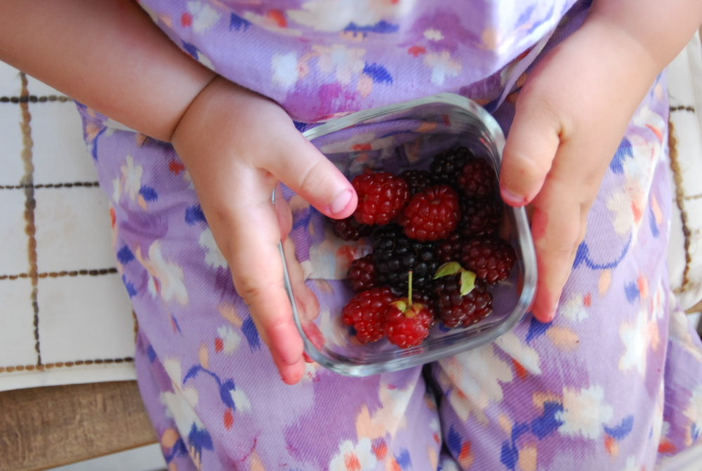 raspberries in turkey 011.JPG