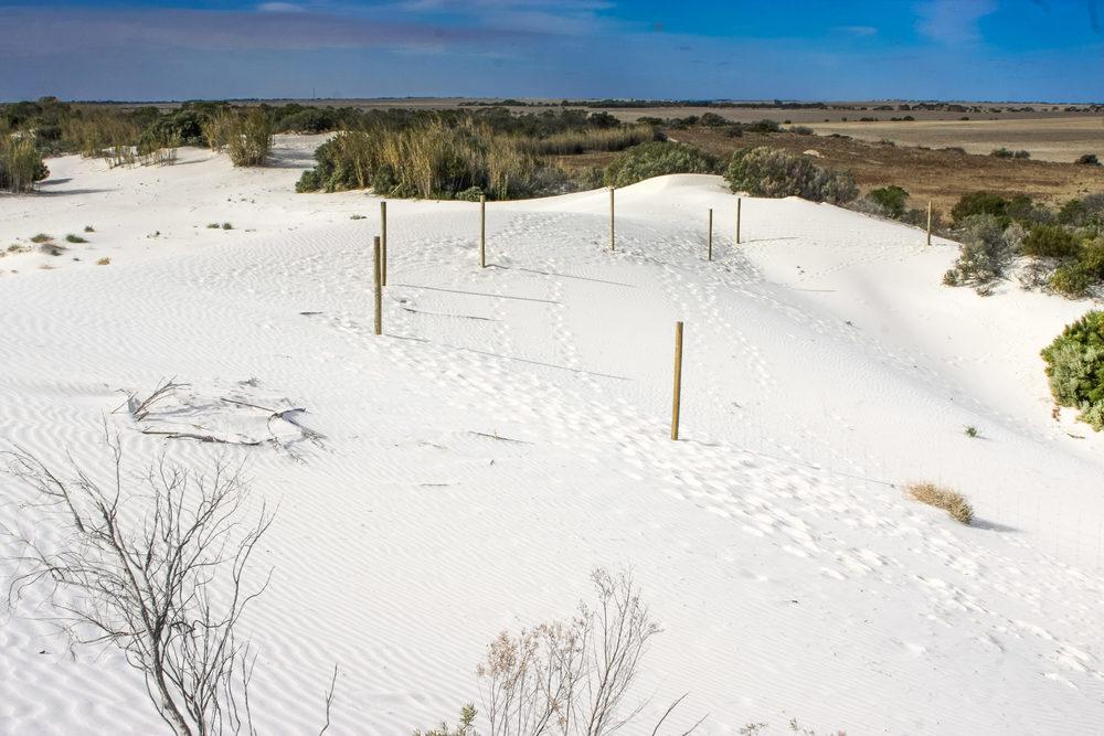 Sand dune restoration area