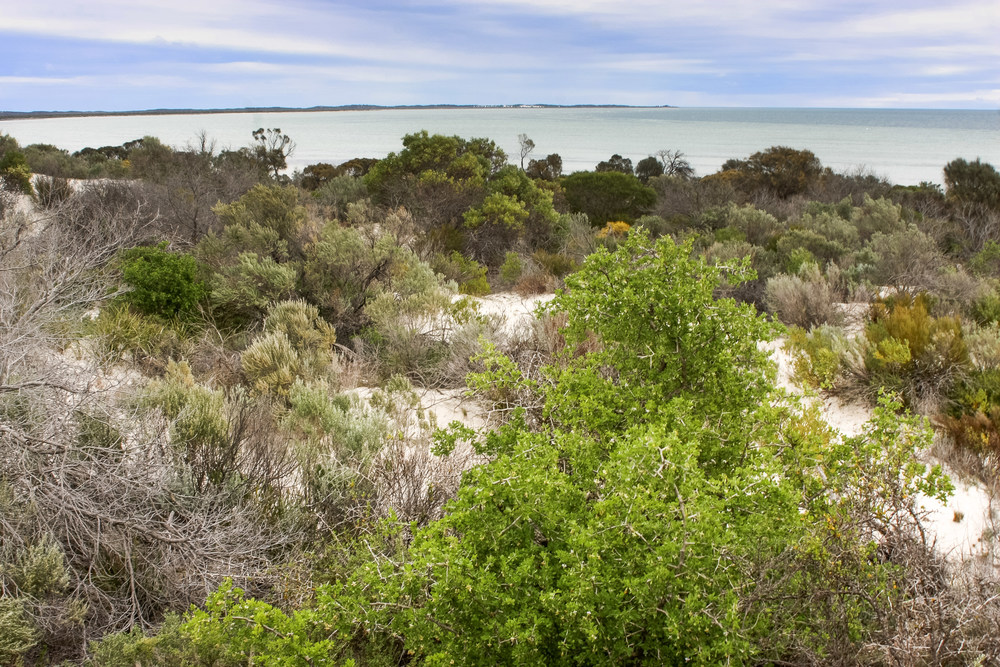Existing local vegetation