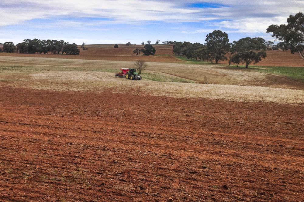 Seeding of pasture